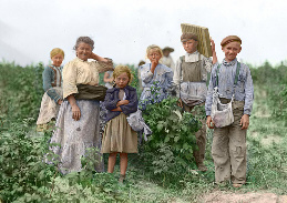 Berry pickers