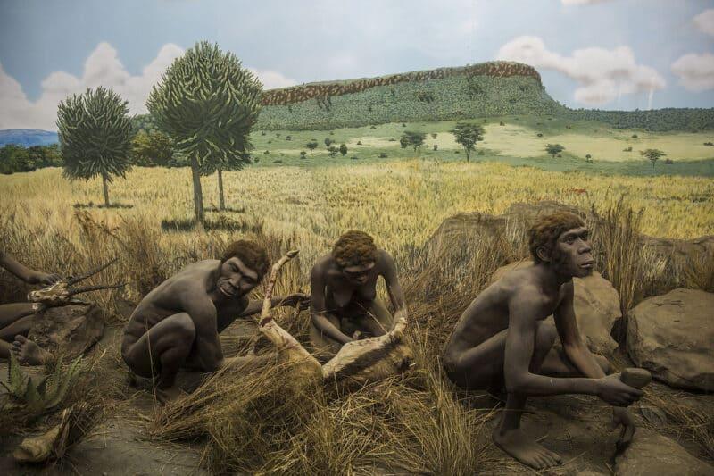 Een diorama in het Nairobi National Museum toont vroege mensachtigen die vlees met gereedschap verwerken.